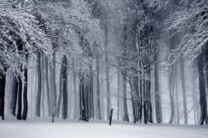 black and white cold fog forest 235621 1