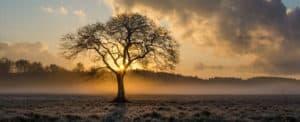 De waardeloze boom